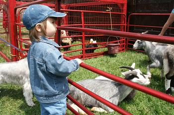 Toddler at the petting zoo