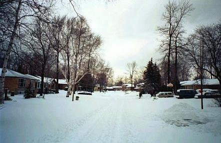 Photo of our street, January 3, 1999