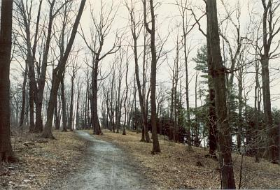Trail in Lemoine Point Conservation Area