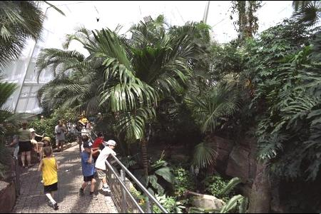 Photo of inside of Butterfly Conservatory